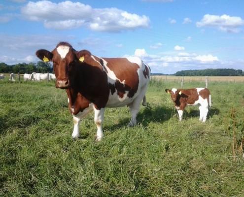 Owner: Farm Reinecke, Welver