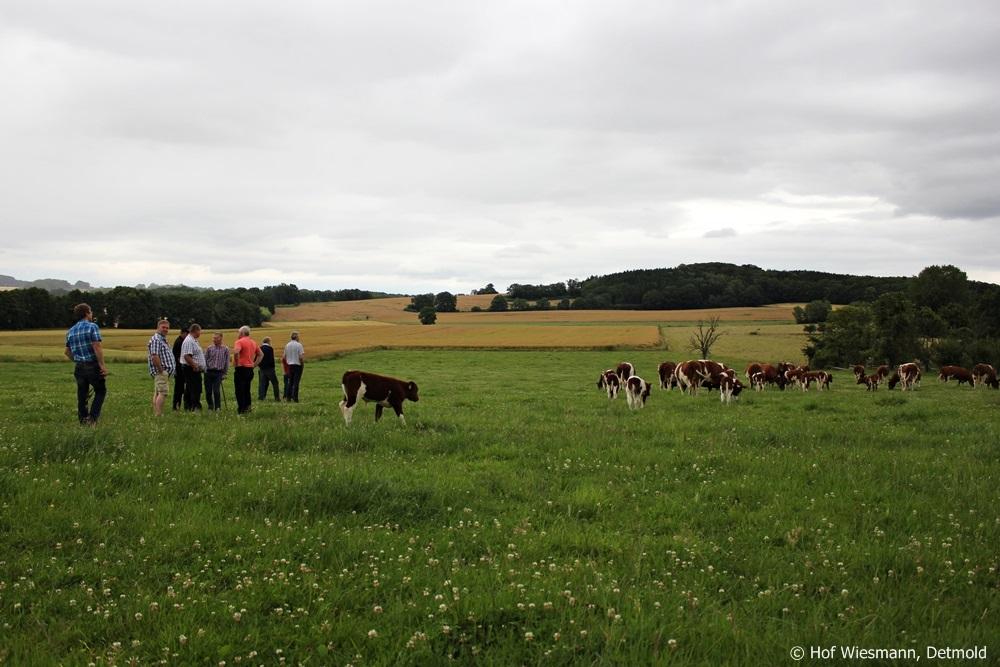 Visite de troupeau lors de l'Assemblée Générale 2014 à la ferme Wiesmann à Detmold