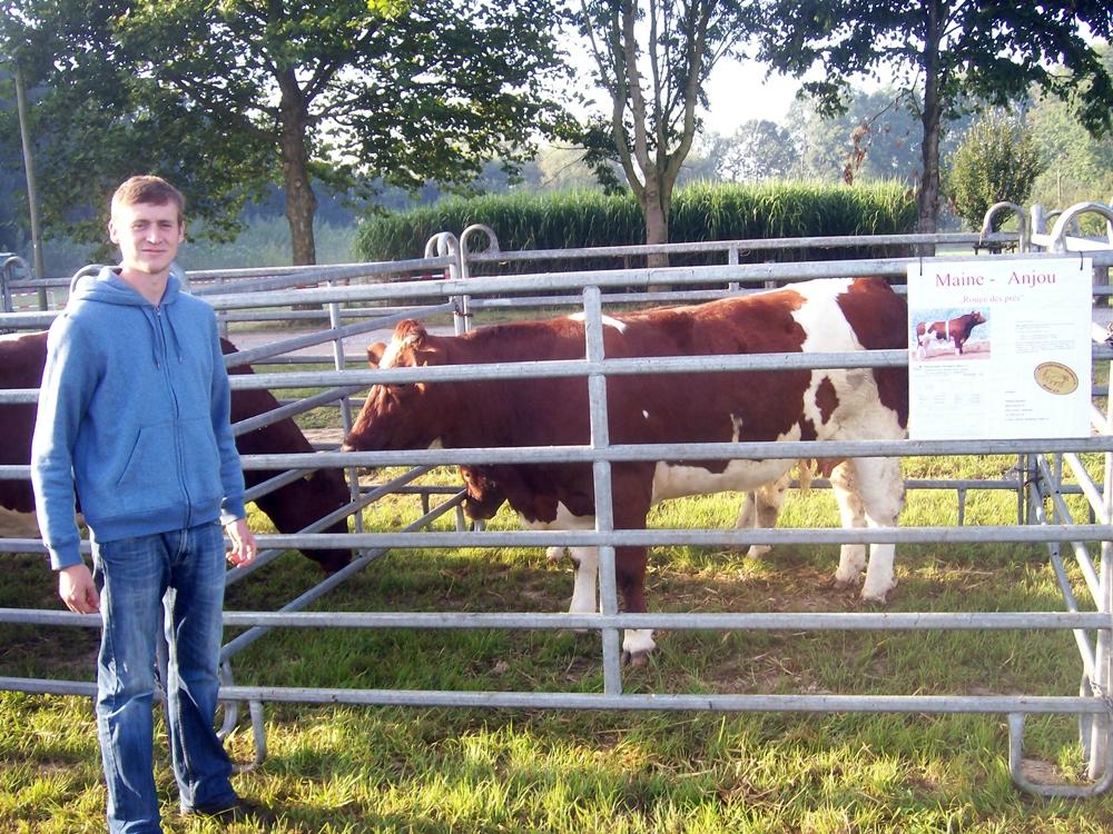 Vache Maine-Anjou avec veau mâle lors de l'exposition animalière régionale à Soest/Hamm au centre de l'agriculture. Éleveur: Matthias Reinecke de 59514 Welver