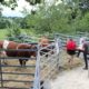 Pascal Lecomte and Nicolas Espalier valuating each individual animal