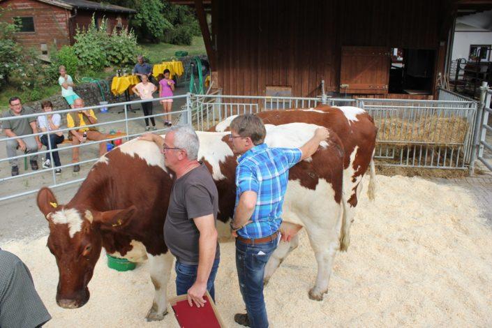 Vorführung und Besprechung der Maine-Anjou Rinder im Ring